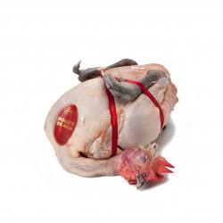 Poulette de Racan prête à...
